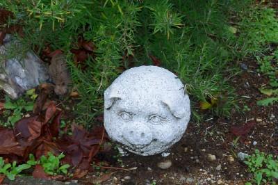 pig garden statue under the rosemary