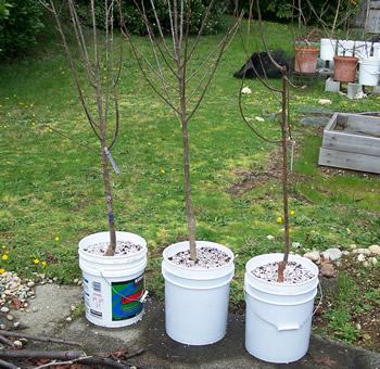 treespots_sm.jpg