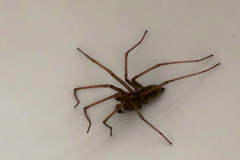 Hairy-Legged Spider