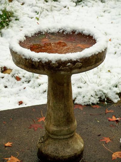snow on birdbath
