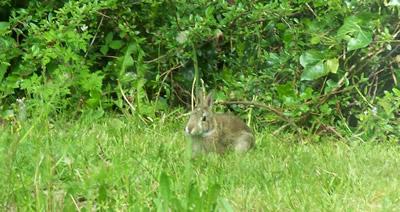 Rabbit through the window